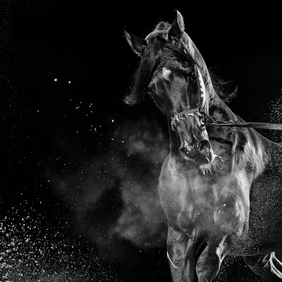 Equestrian Arabian Show Horse Advertising Photography UK