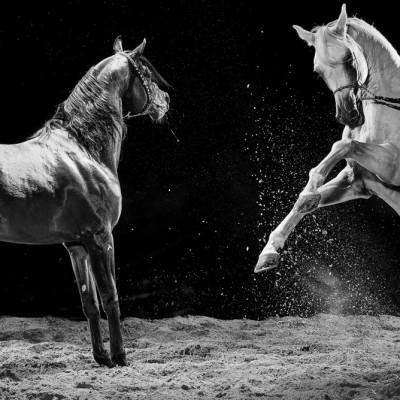 Arabian Horse Showdown Advertising Photography London